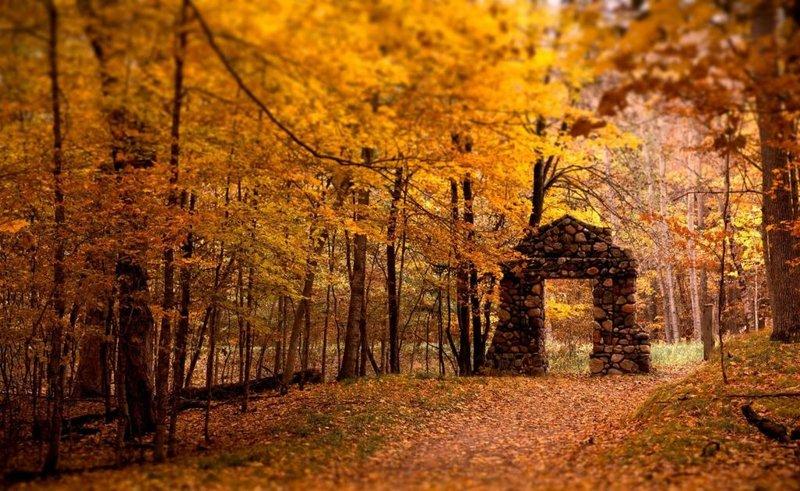 осенняя природа листопад