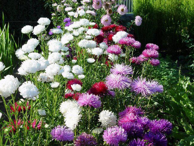 Каталог садовых цветов - названия, фото и описание садовых