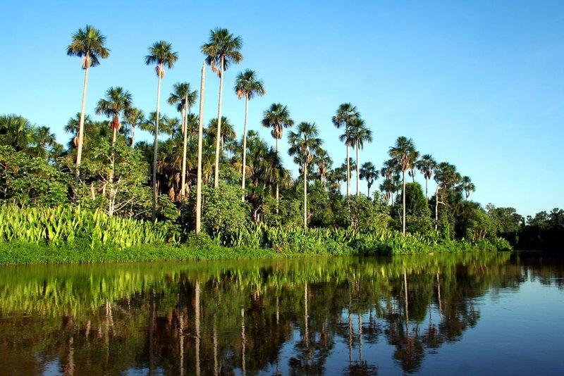 Природа Бразилиирай