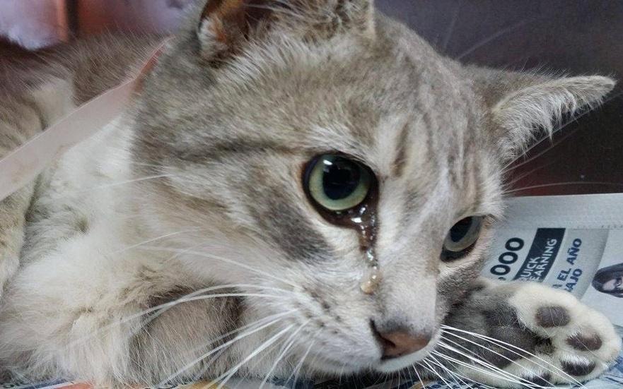 картинки кота и слез композиции свежесрезанных