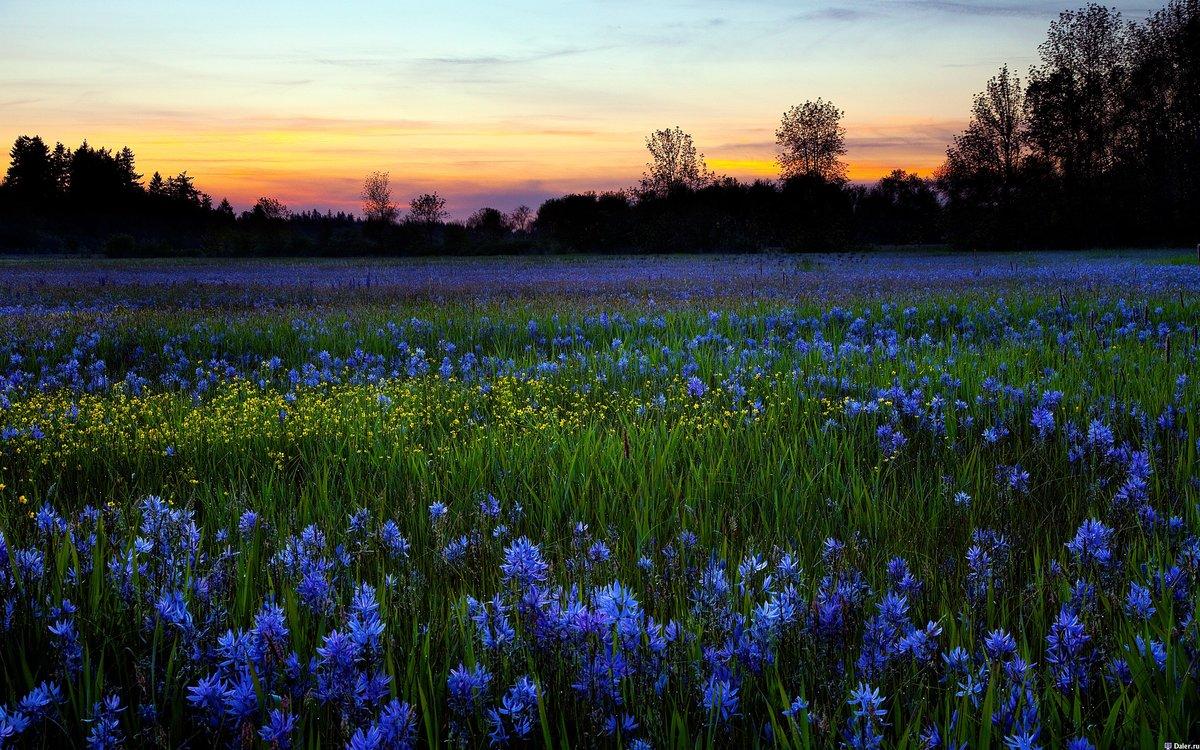 Сердечками, открытки поля цветов