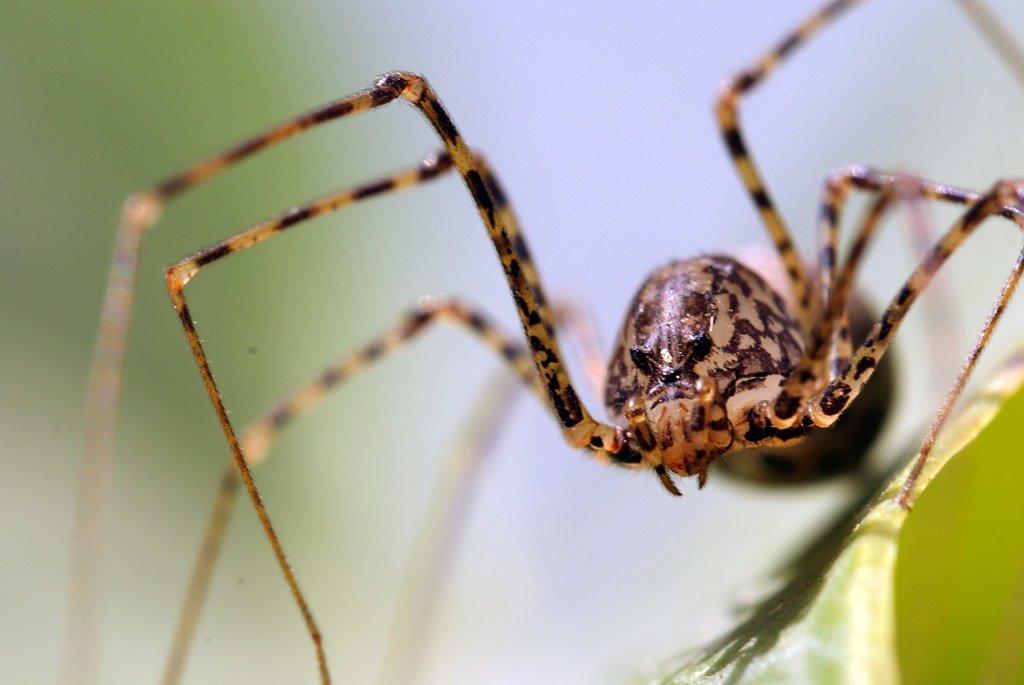 Картинки пауки с названиями