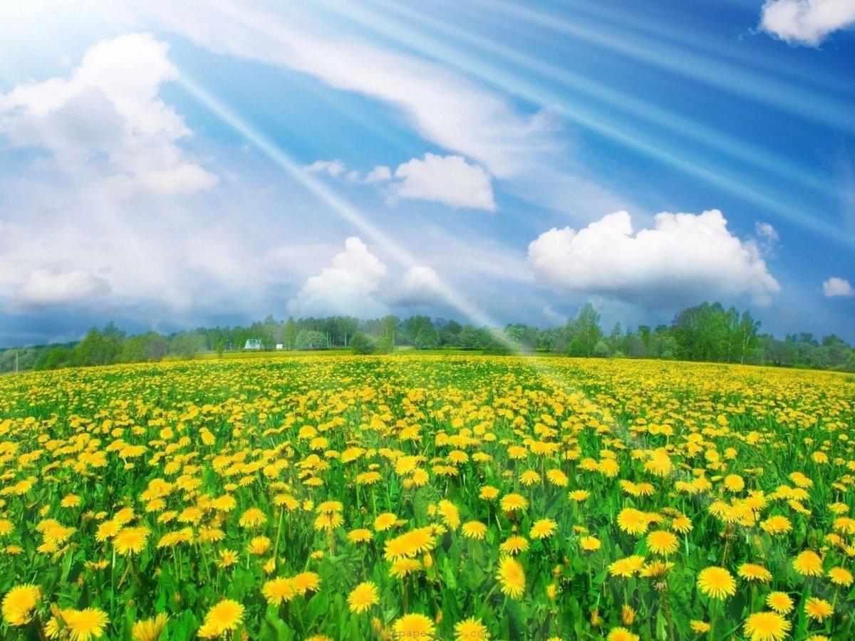 Картинки полянка с солнышком