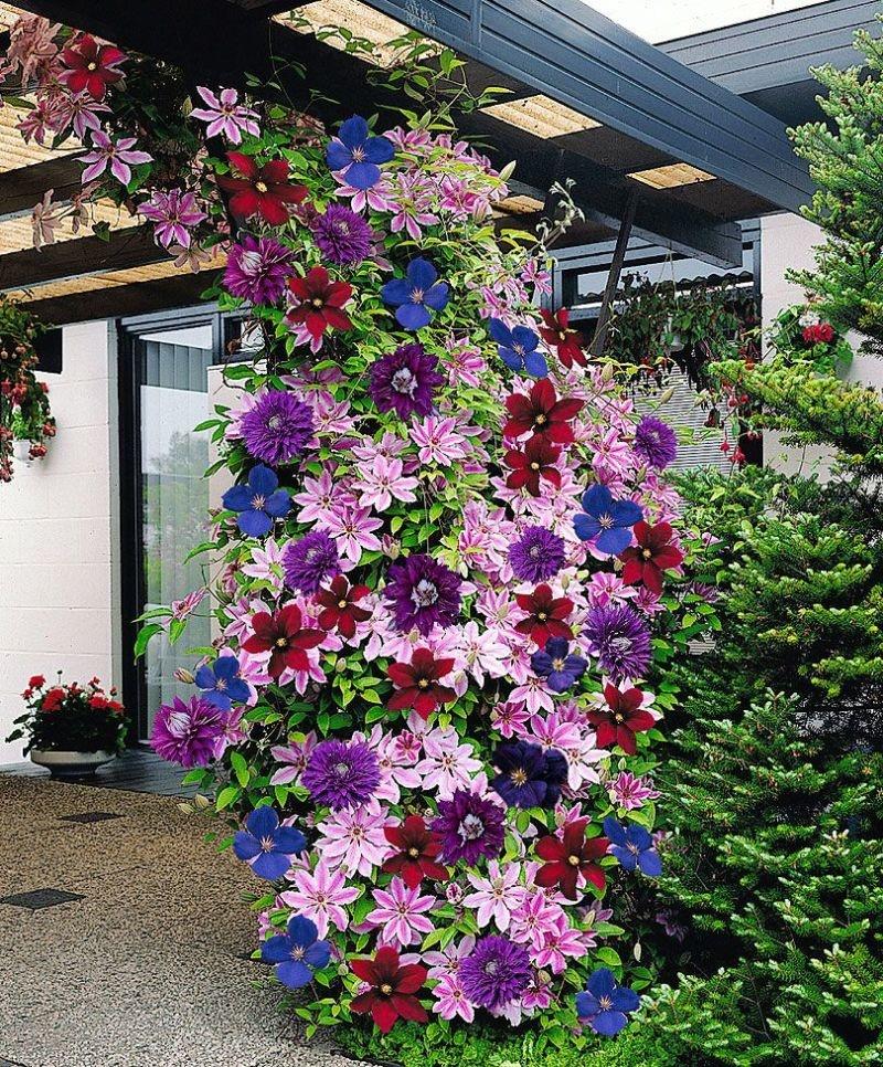 Доставка, цветы в сад на заказ