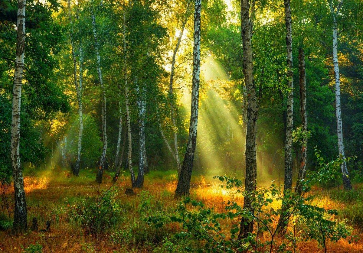 красивая открытка леса несет цепь, символизирующую