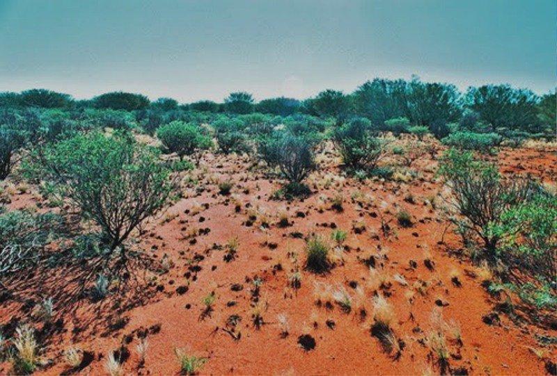 Домашние животные в тропической пустыне австралии внешне Катя Таисией