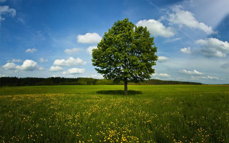 Самое чудесное время года, сказочное, дарящее теплые ночи и ясные, пропитанные ласковым солнышком дни – это лето.