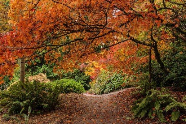 осенний пейзаж листопад