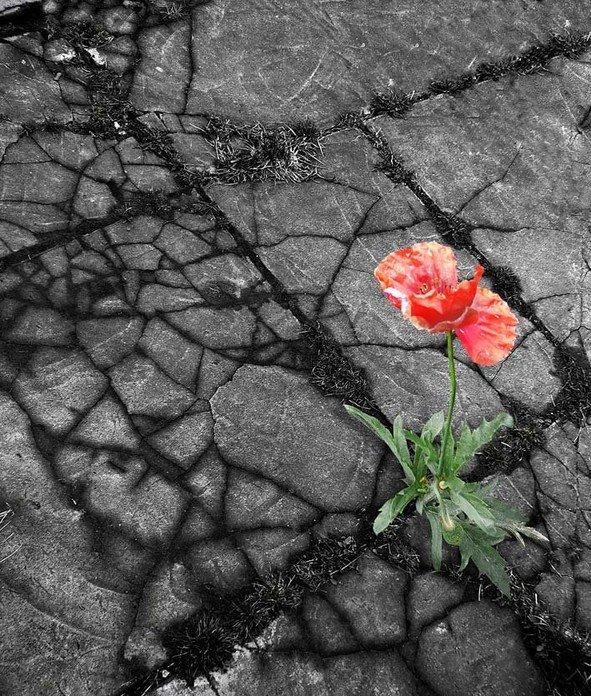 Цветы, купить цветы на асфальте