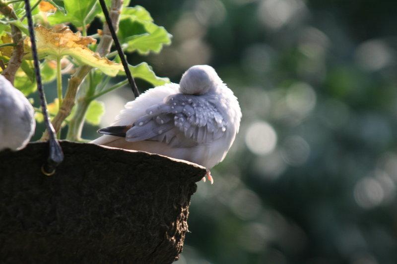 птичий сон фото всегда