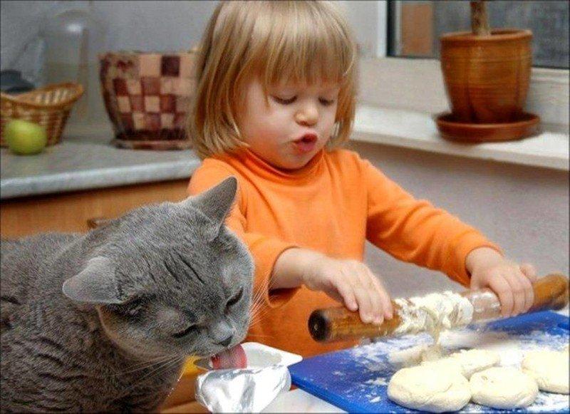 Антона, прикольные картинки с детьми и кошками