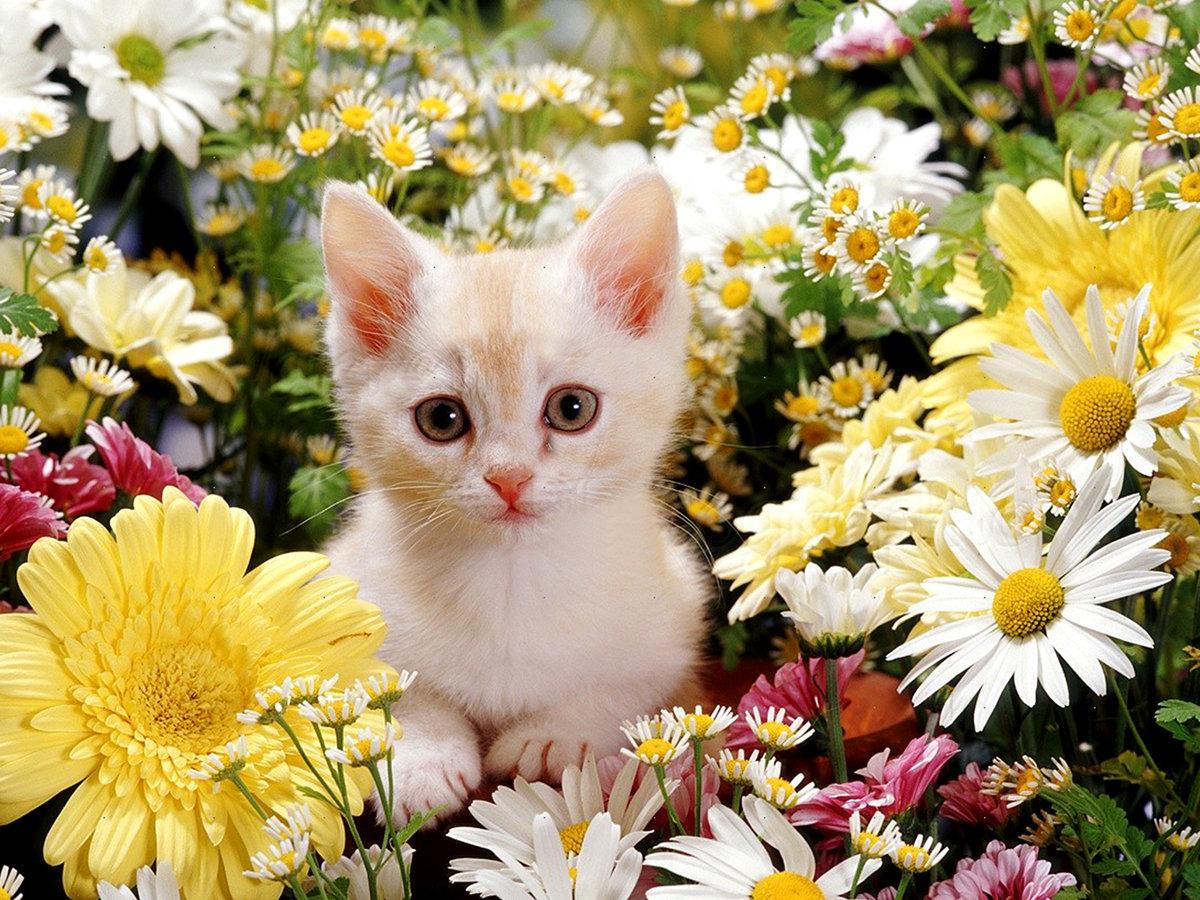 Фото кота с цветами