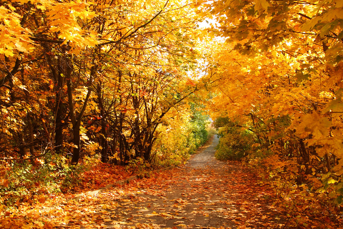 Картинка на золотую осень, музыкальные