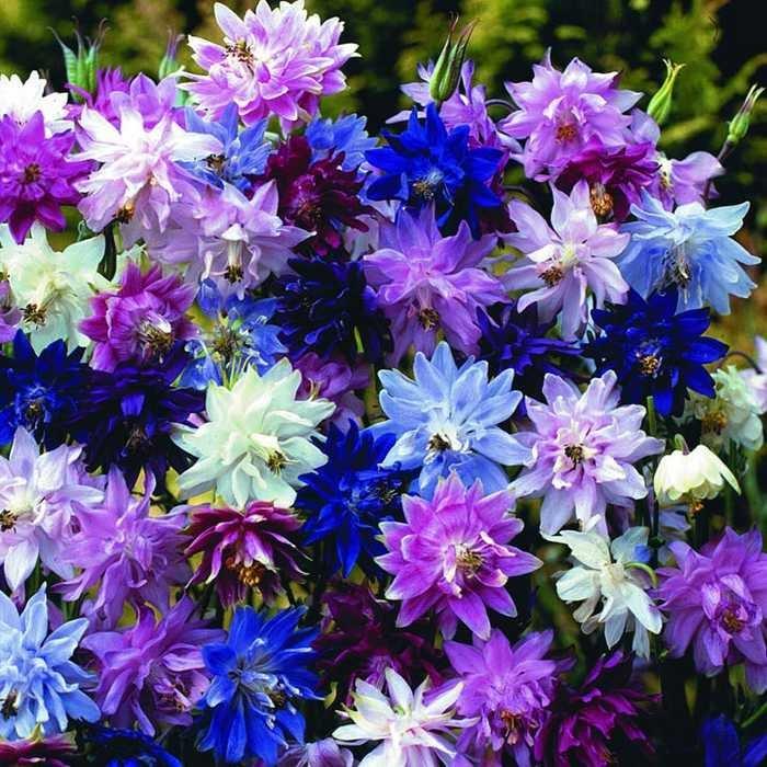 Кованые вазы для цветов фото машина аппаратура