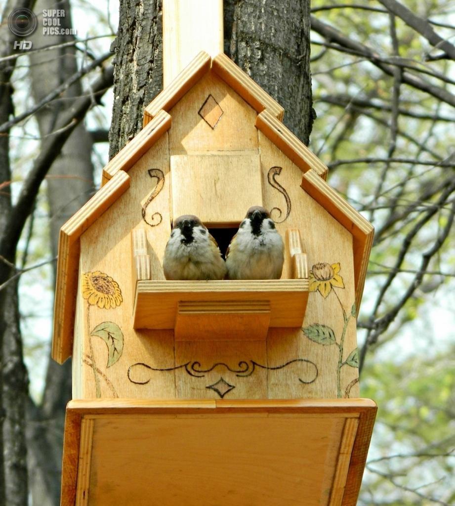 Картинки скворечник птицы
