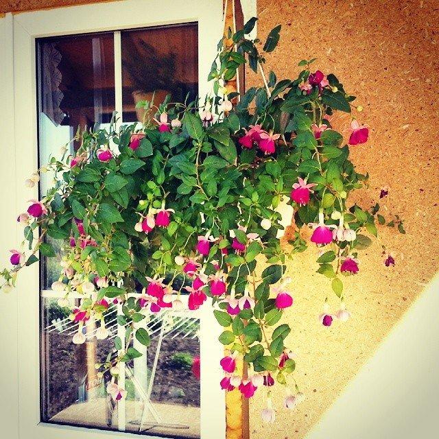 """Вьющиеся растения на балконе"""" - карточка пользователя liudmi."""