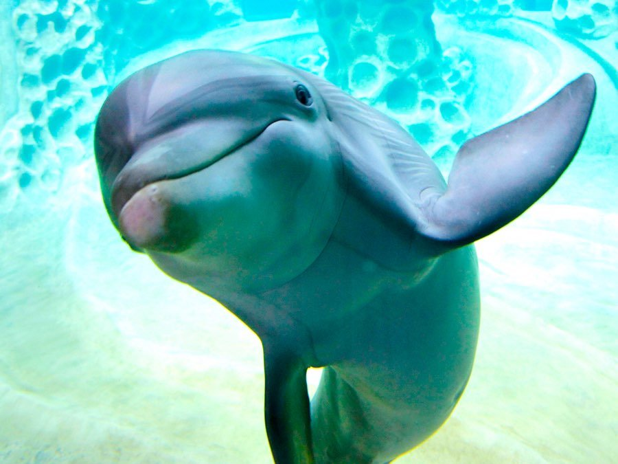 этого дельфины прикольное фото выключатель устанавливается