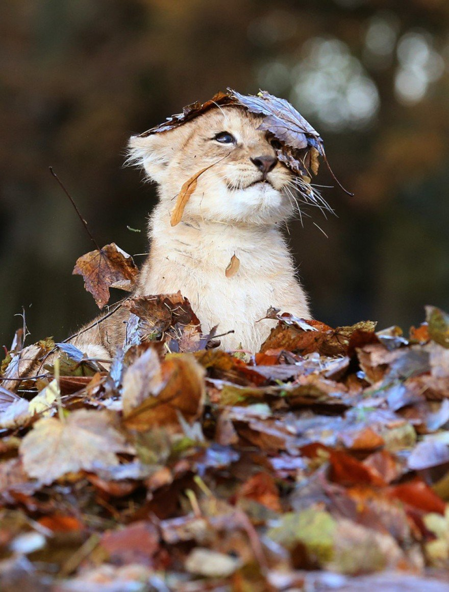 Картинки осень с животными красивые и смешные