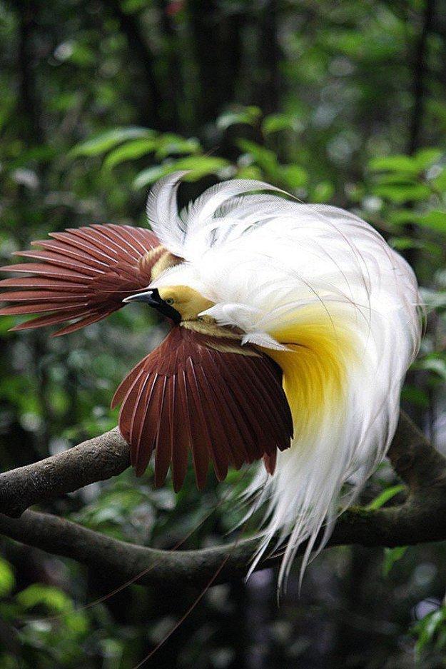 райские птицы красивые фото группе