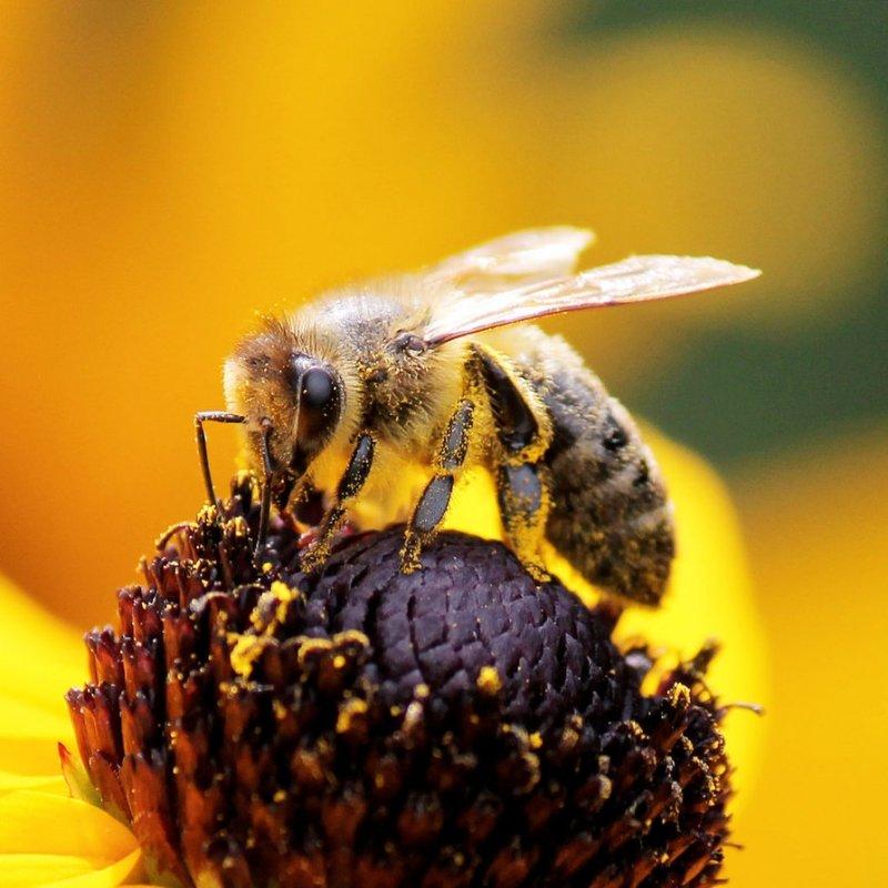 жизнь пчелы картинки самом