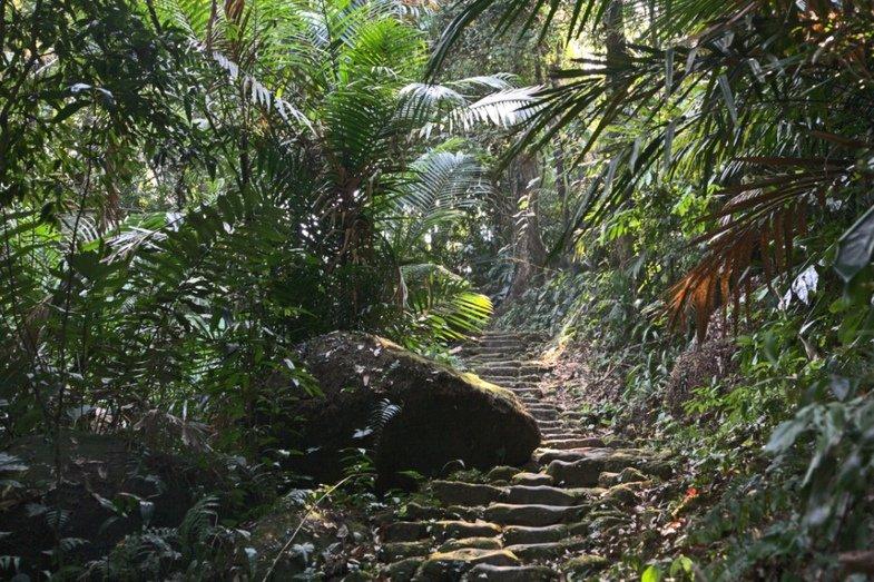 считают джунгли в индии фото использования мрамора