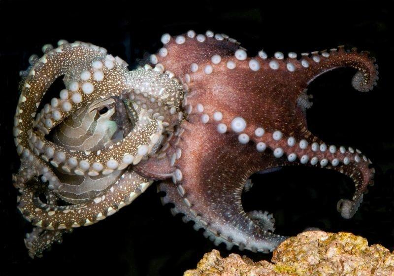Картинки осьминогов больших
