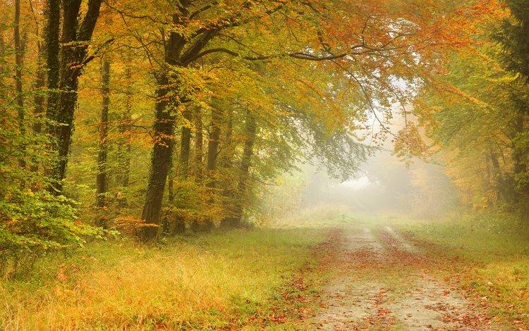 Осеннее туманное утро