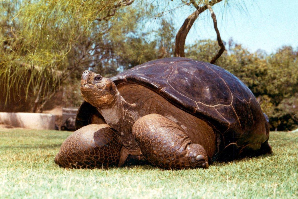 фотографии гигантских черепах жидкость