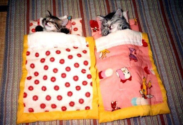 Тебя люблю, прикольные картинки котики в кроватке