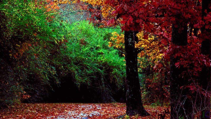 Красные листья в осеннем лесу