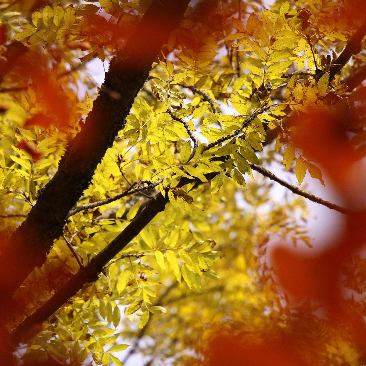 Осень короткие и красивые картинки
