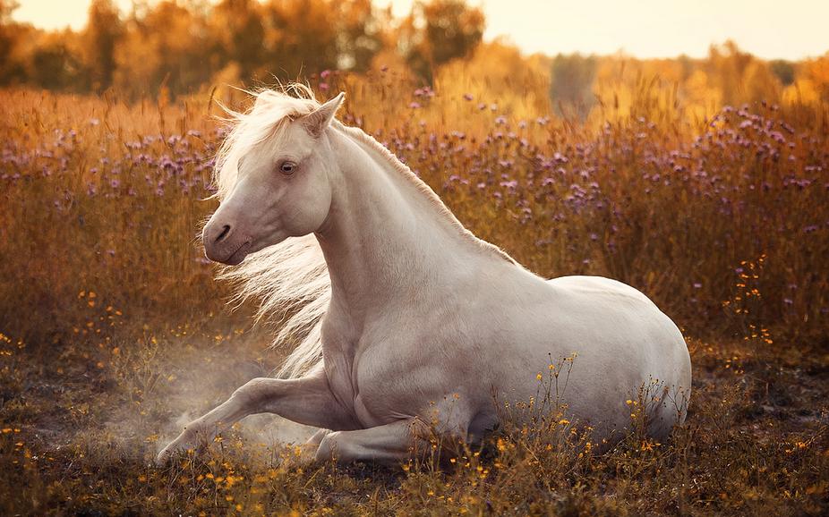 Белые конь и лошадь картинки