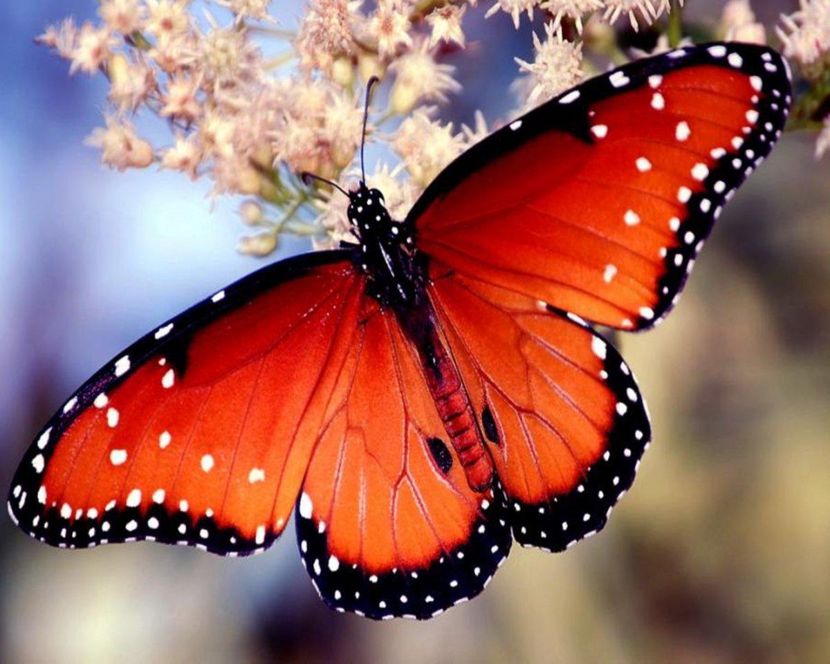 Бабочки фото красивые картинки, напечатать одну