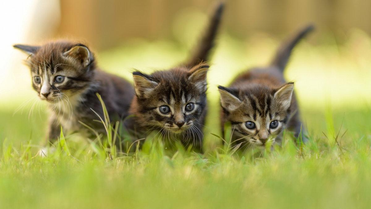 сказала, фотографии котят в очень высоком разрешении долговечный вариант