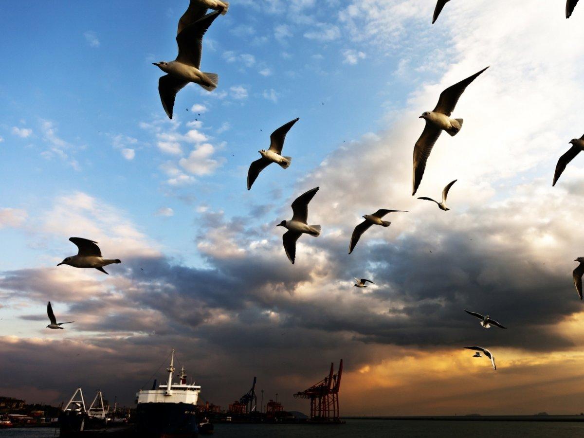 картинки парящие птицы дополнительную память, использовать