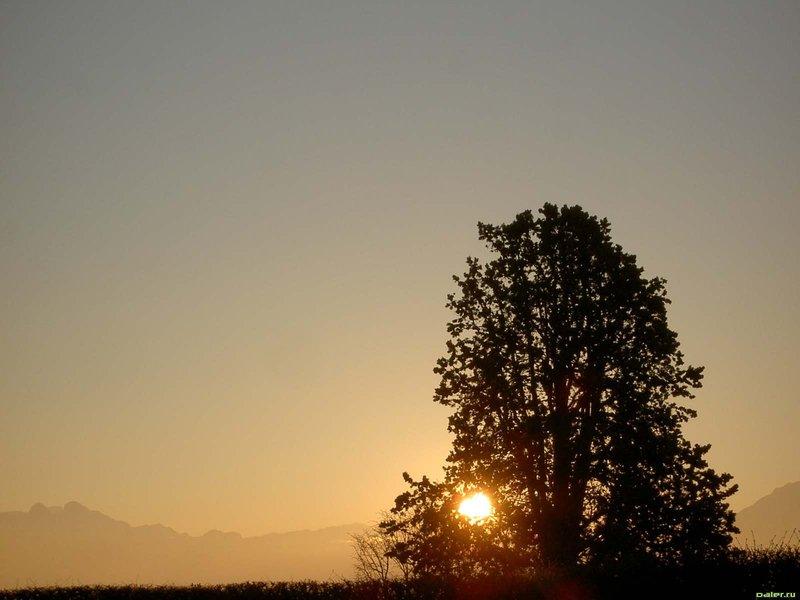Дерево на фоне рассвета