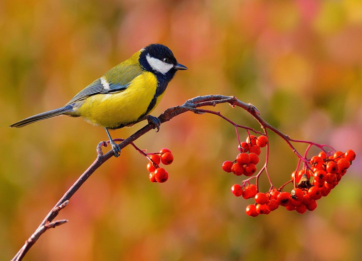 Птички осень картинки