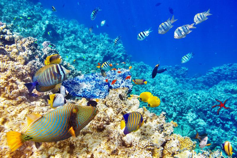 Tecnologia tornará monitoramentos dos oceanos mais ágil e com custo menor - Foto: Thinkstock