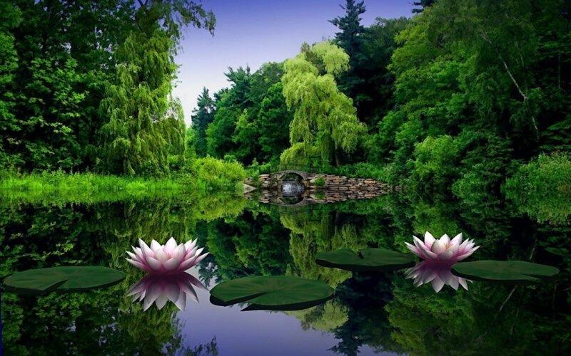 цветы,фото парк летом