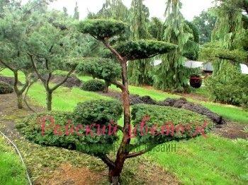 Райский цветок» - ландшафтный дизайн, озеленение в Махачкале Ландшафтный дизайн «Райский Цветок»