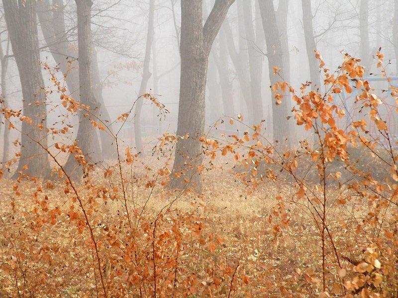 «Пейзаж». Автор: Виктория ЖиВи