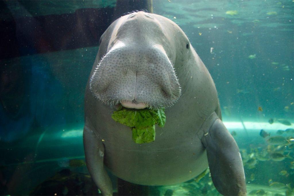 сколько фото исчезающих животных морских уже