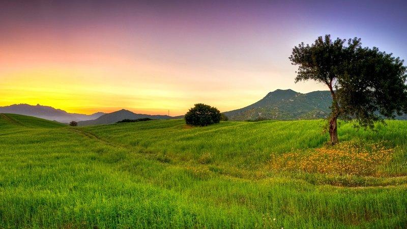 Сколько прекрасных фото природы летом может запечатлеть камера объектива. Это и спешащий по своим делам трудолюбивый муравей, и вишни с черешней, налитые соком, изумрудная листва с тяжелыми ветками, усыпанными абрикосами