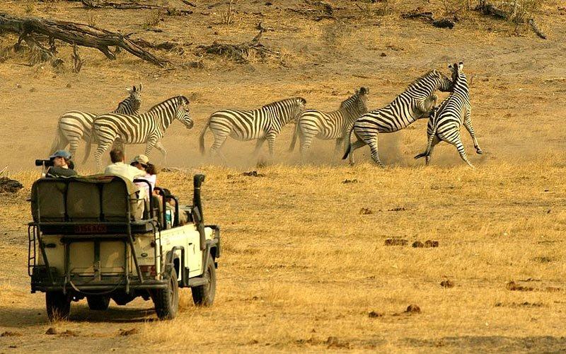 переполнена, путешествия ботсвана фото еще очень
