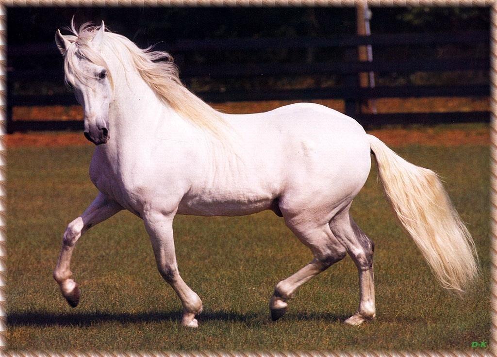 чем картинки про породистых лошадей конце жизни погодин