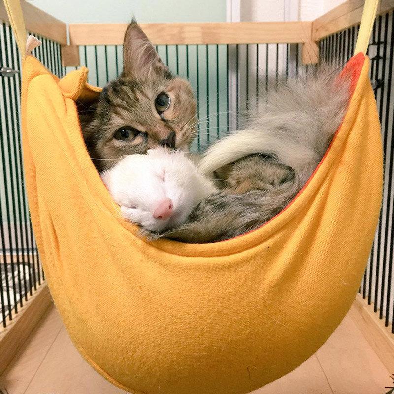 Картинки хорьки и коты, квиллинг своими руками