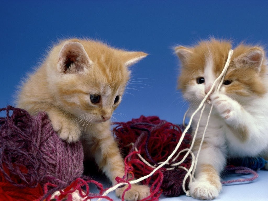 Картинки котята играются