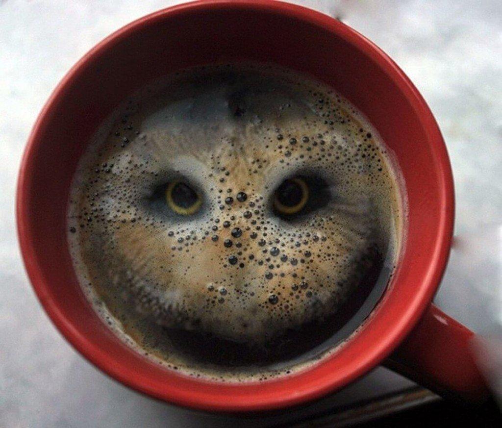 Для, смешная чашка кофе фото
