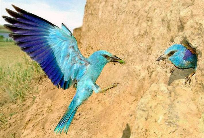 поздравить вас птицы калмыкии фото и названия птиц оптимист