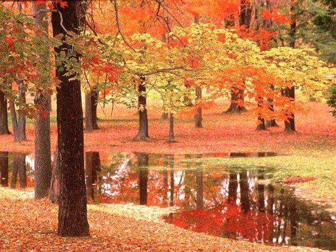 Золотая осень листопад